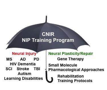 CNIR NIP Training Program